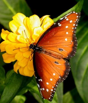 butterfly_watching.jpg