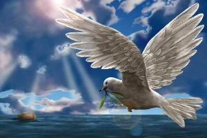 Seven Days between Doves